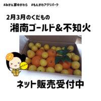 湘南ゴールド&不知火の収穫開始(2/13~)
